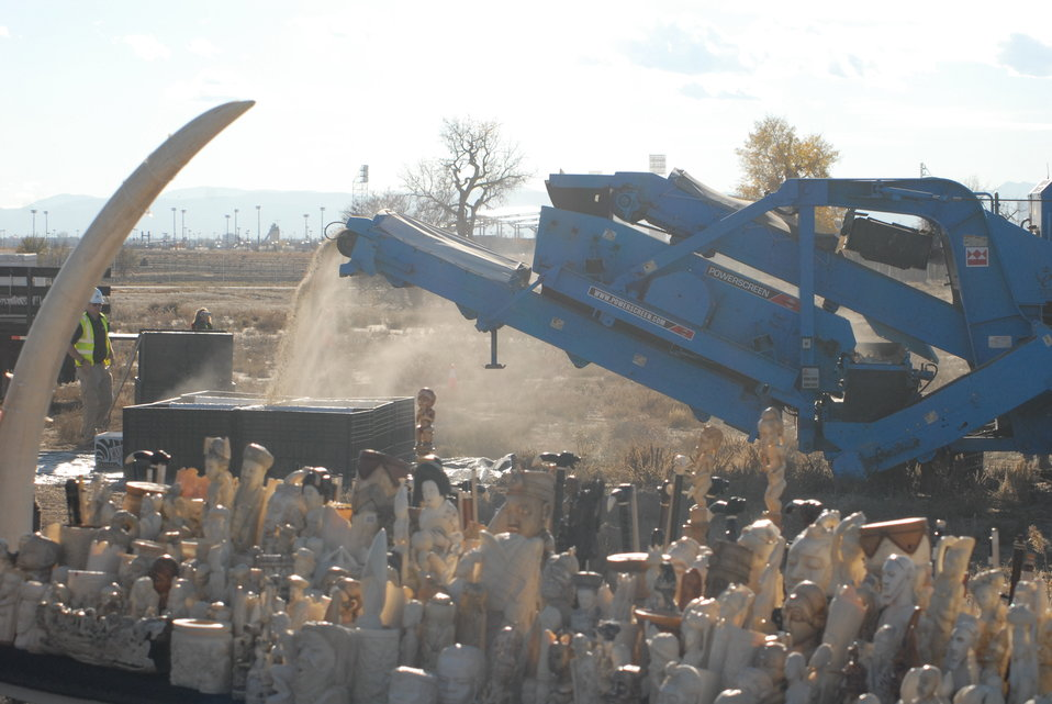 The crusher in action as it pulverizes the ivory