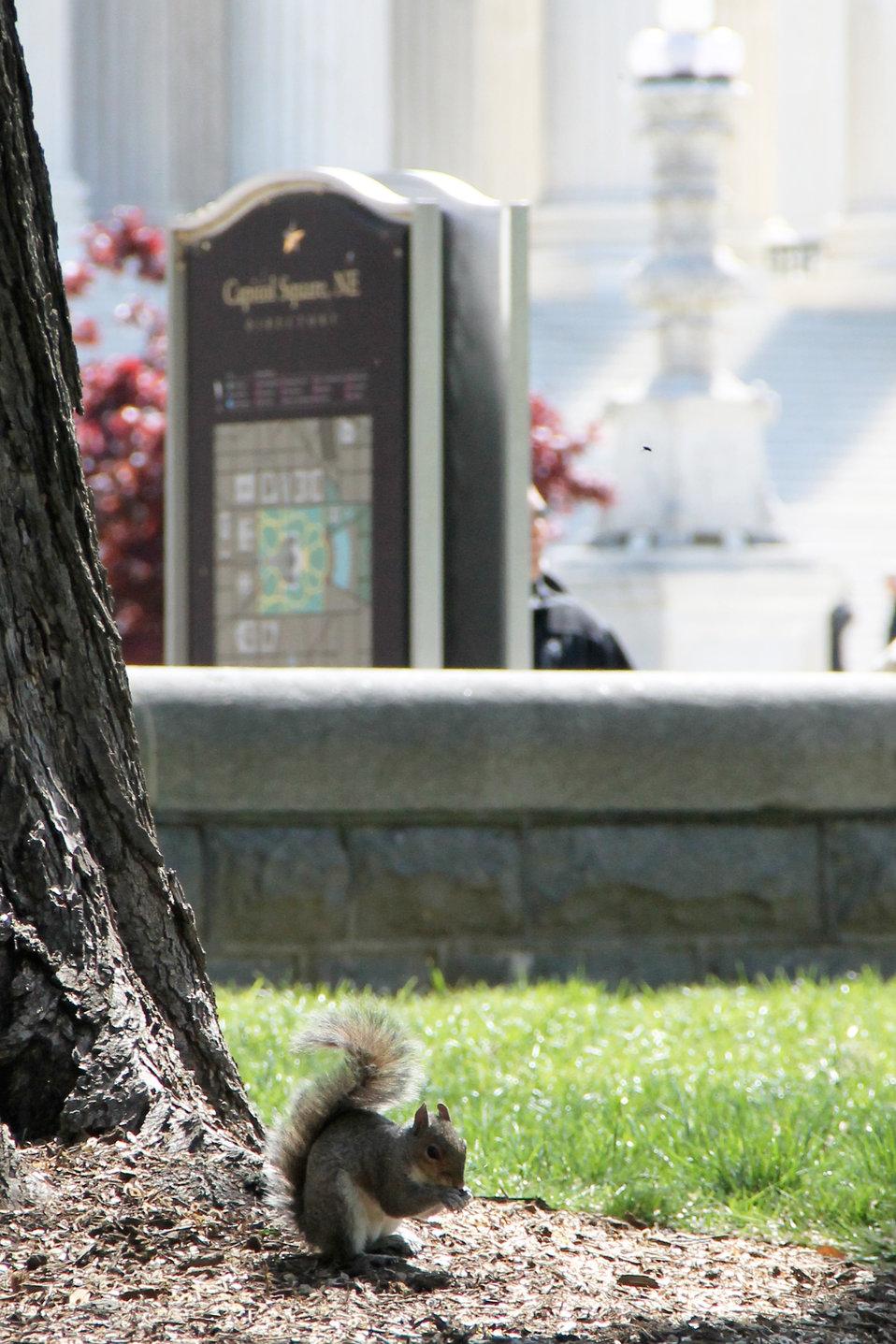 Squirrel on Capitol Square