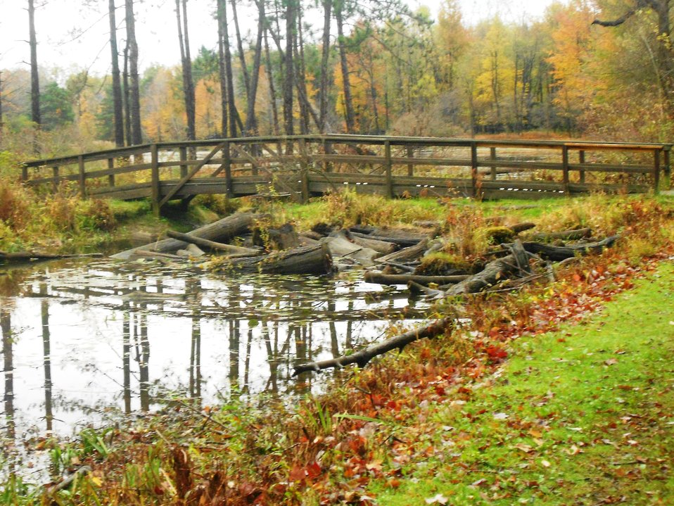 Trail bridge at Reinstein Woods Nature Preserve