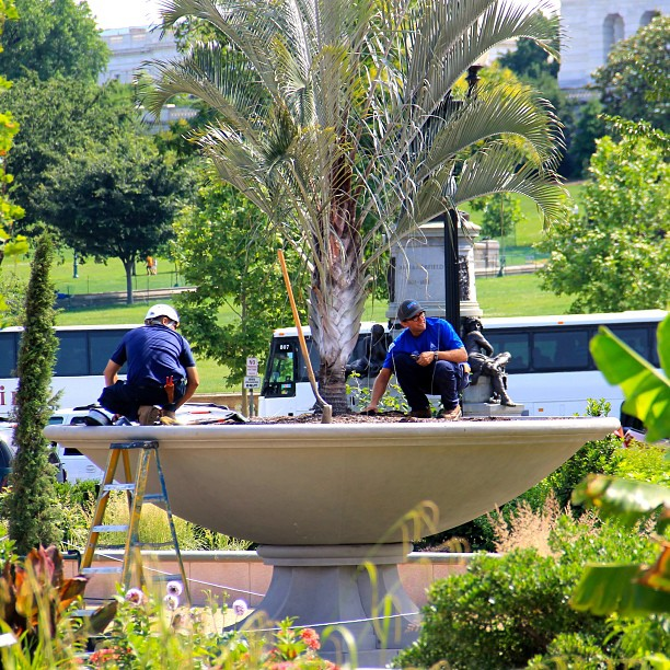 Great day to visit the Botanic Garden; USBG gardeners at work.