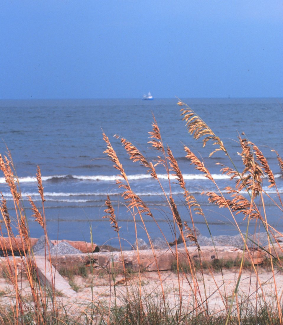 Looking through the sea oats to the Atlantic Ocean