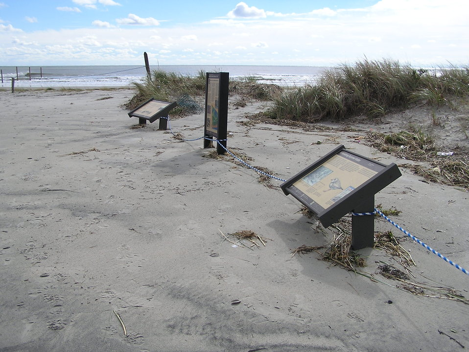 Hurricane Sandy damaged Cape May National Wildlife Refuge (NJ)