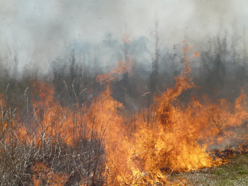 Fire Consumes Brush