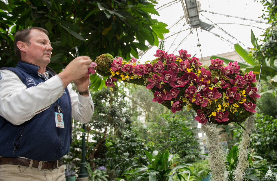 Preparations underway for Orchid Symphony exhibit at U.S. Botanic Garden