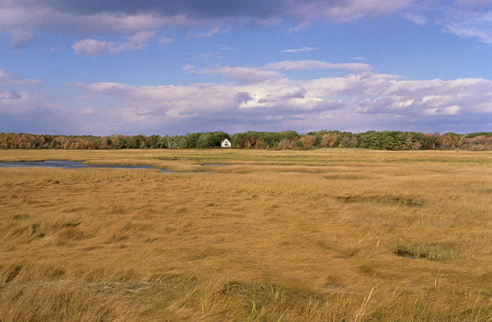 New England coastal marsh