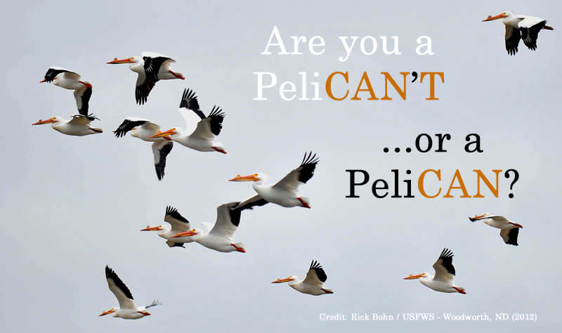 Are You a peliCAN?