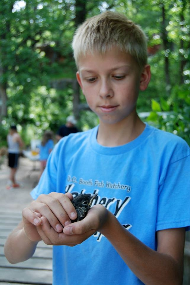 Connor Speirs gently releases a young robin that was banded during an educational Hatchery Helper session.  Each summer a university ornithologist travels to D.C. Booth from SDSU to teach the Helpers about birds.