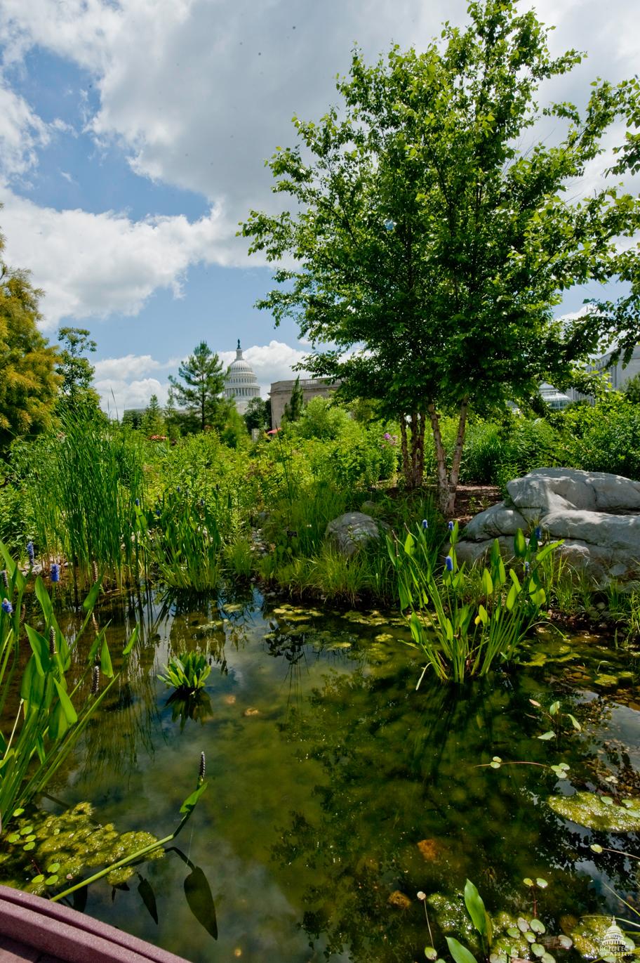 The National Garden at the U.S. Botanic Garden