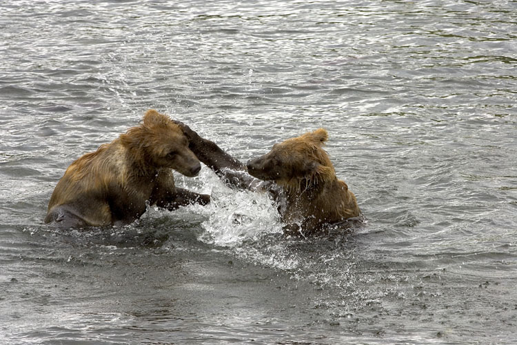 Bears of Kodiak Refuge