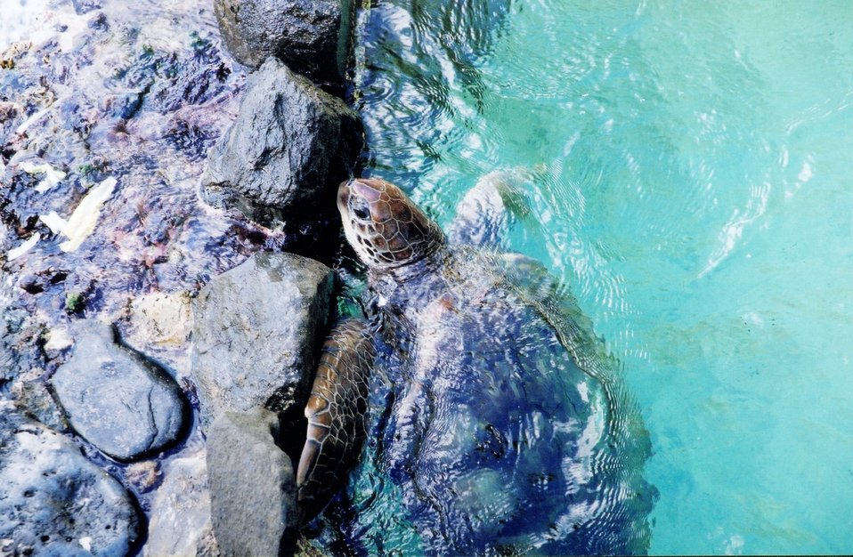 The turtle pool at Coral World