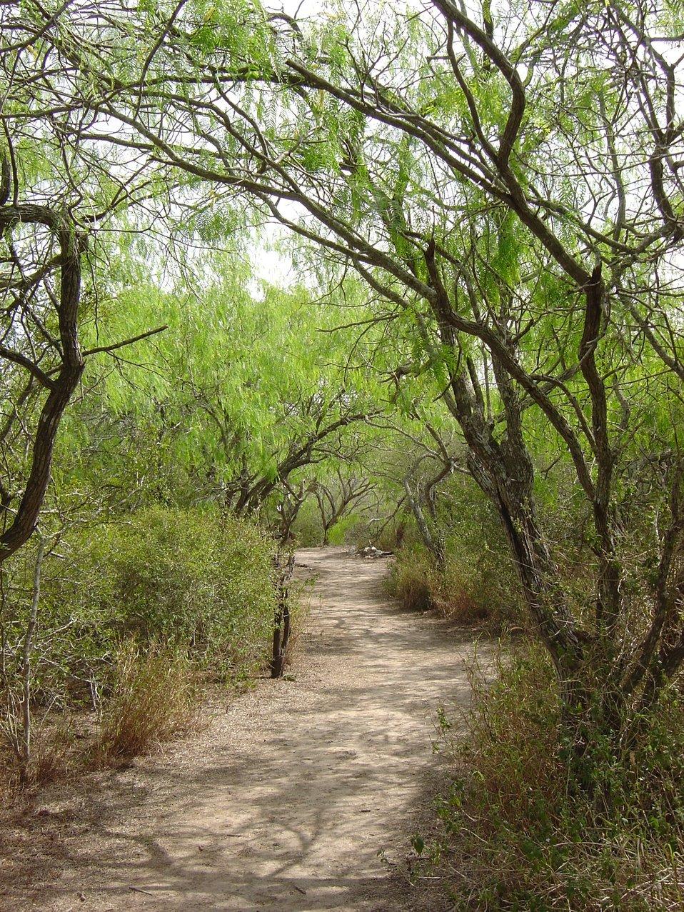 Laguna Atascosa NWR trail