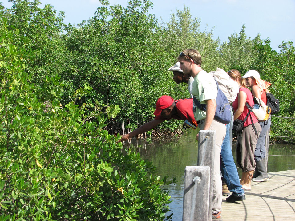 Learning about mangroves-2