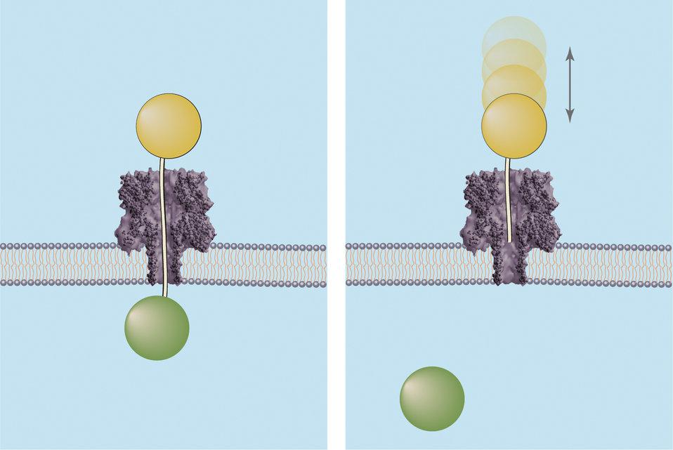Molecular Rulers