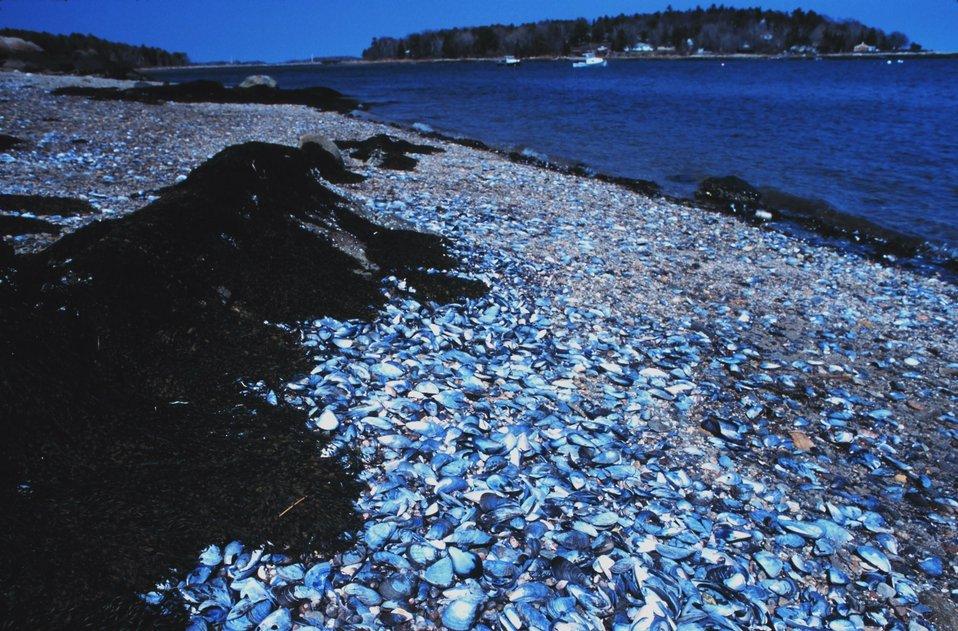 Rocks, seashells, sand, and seaweed