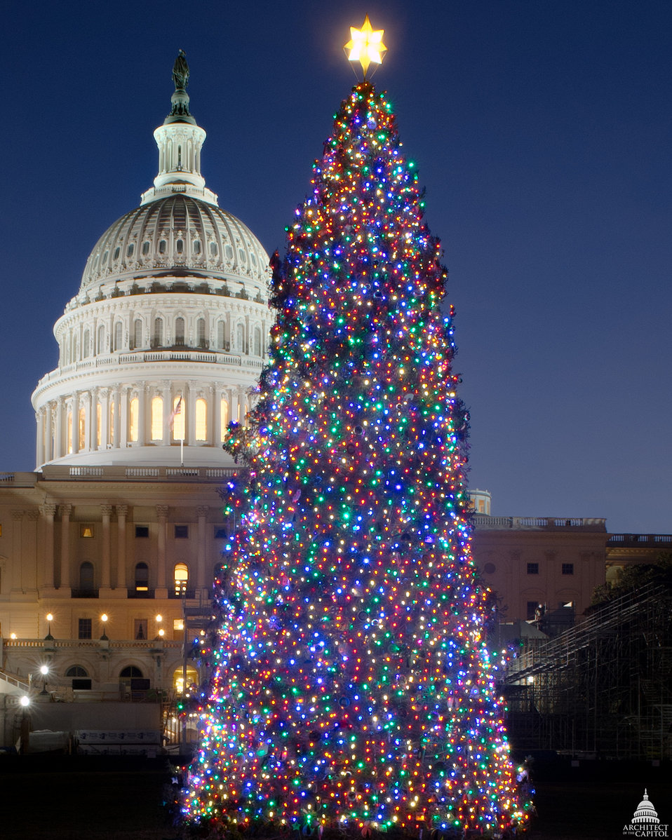 Capitol Christmas Tree 2012