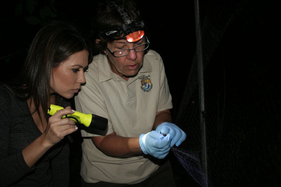 Biologist Examining Bat