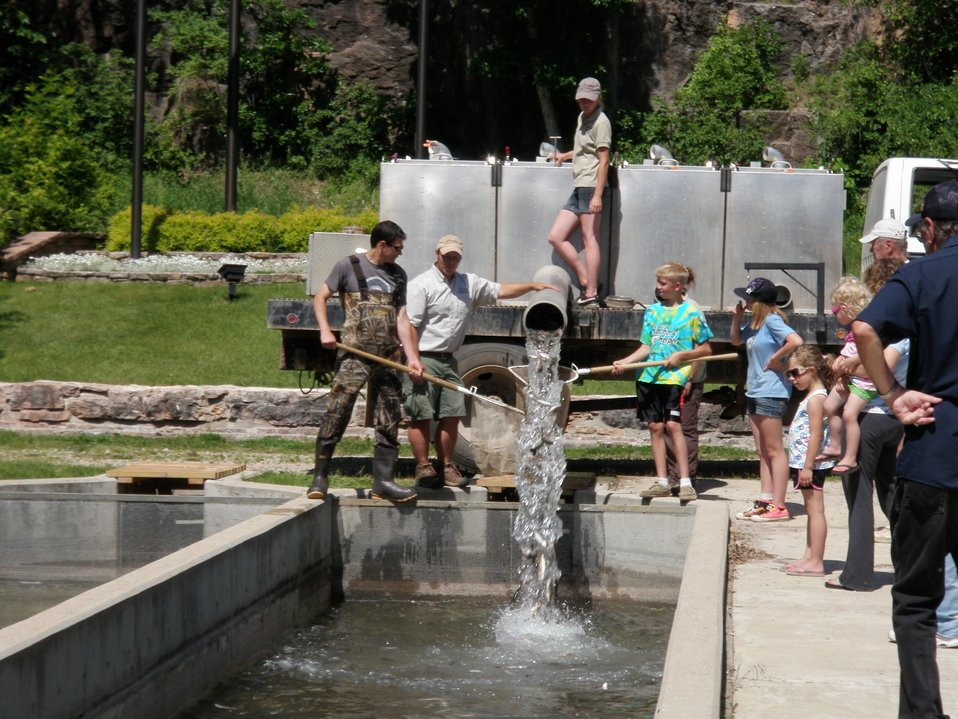 Hatchery Helpers eagerly helped prepare the raceways for an incoming shipment of trout, and were all hands on deck when the trout arrived.