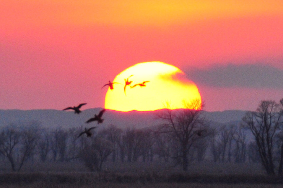 Mallards at sunset Lacreek National Wildlife Refuge