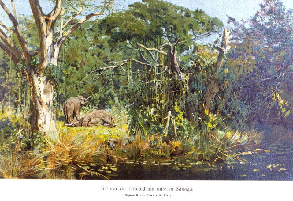 Cameroon German colony - a view of elephants in the forest. In: 'Das Deutsche Kolonialreich,' by Hans Meyer, 1909.  Vol I, p. 442. Library Call Number: Cfd M612 d