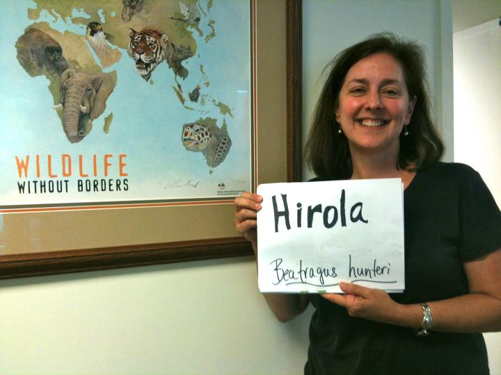 Megan Hill, 'Hirola,' Credit: USFWS