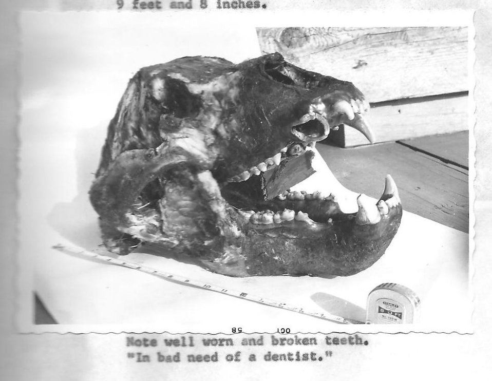 (1958) In Bad Need of a Dentist