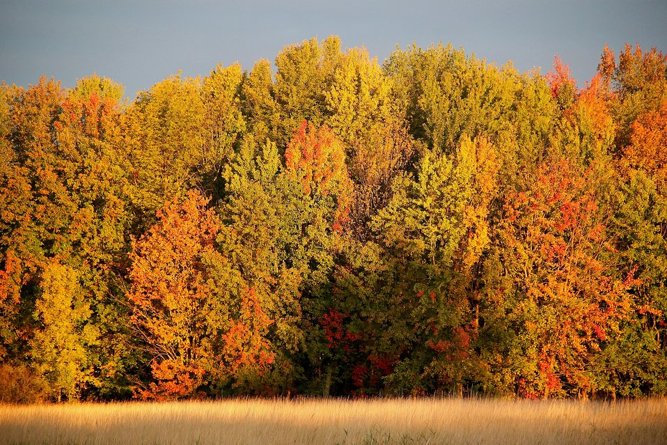 Fall foliage at Missisquoi National Wildlife Refuge