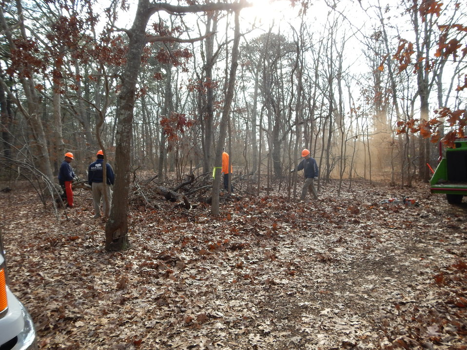 Tree removal at Wertheim National Wildlife Refuge
