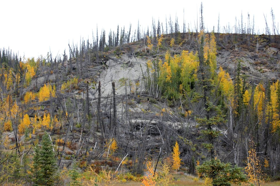 Combination of forest fire and melting permafrost causing radical changes to local ecology