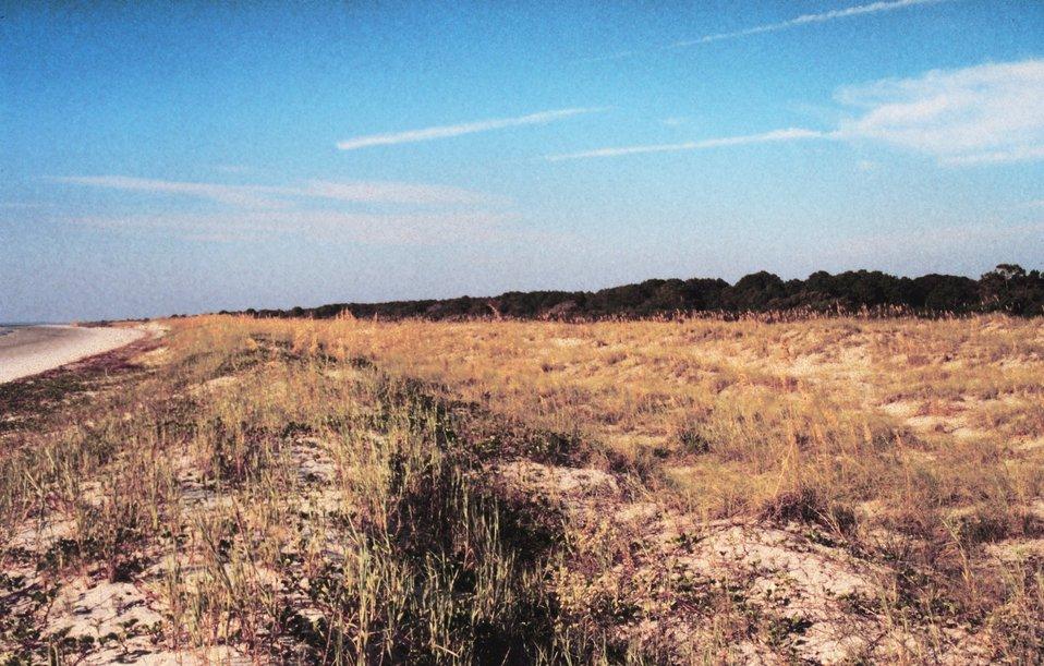 Primary dunes.