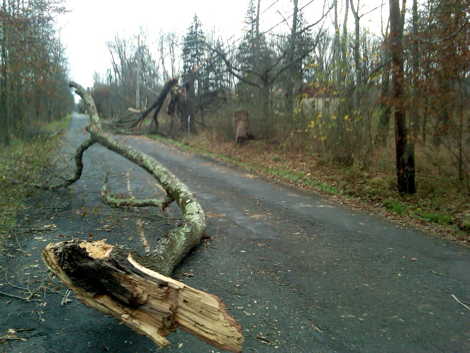 Hurricane Sandy caused damage at Great Swamp National Wildlife Refuge (NJ)