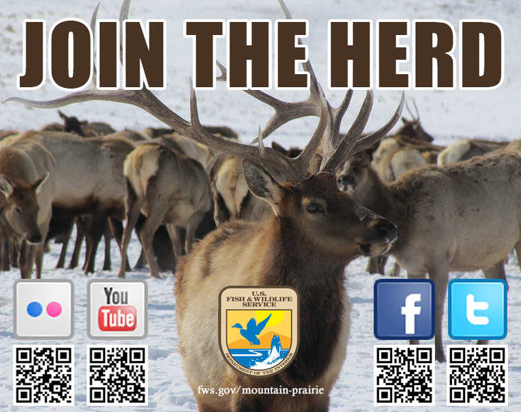 Join the Herd!