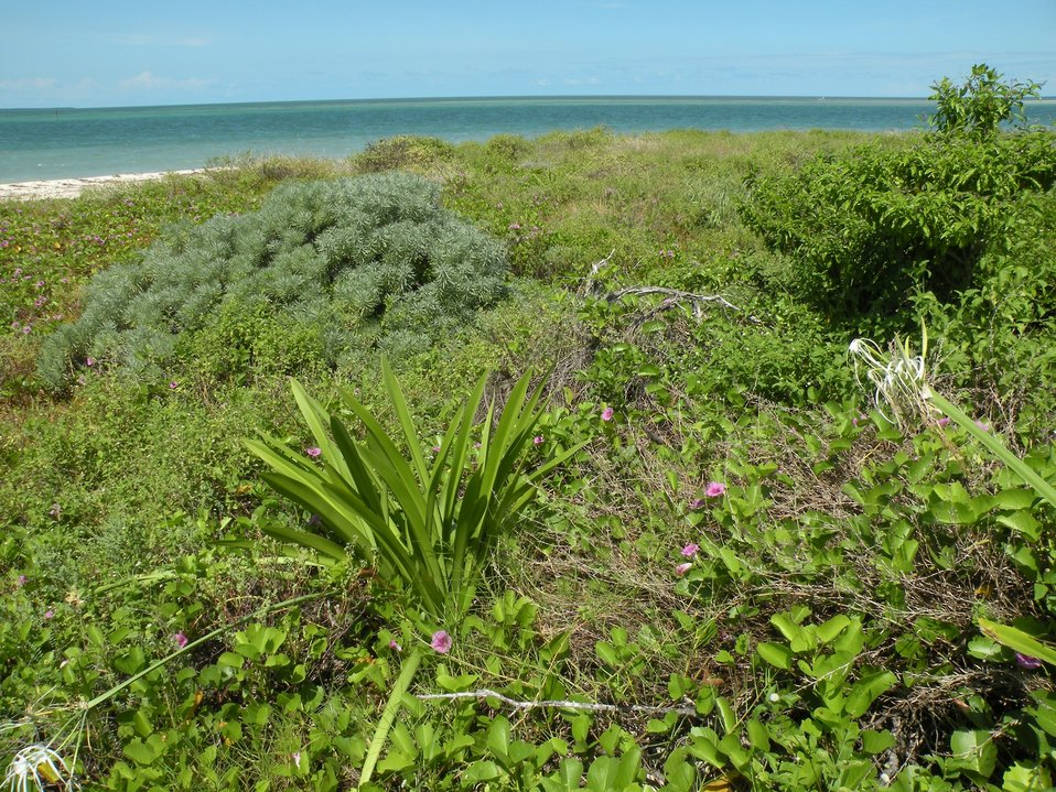 Key West NWR and native plants
