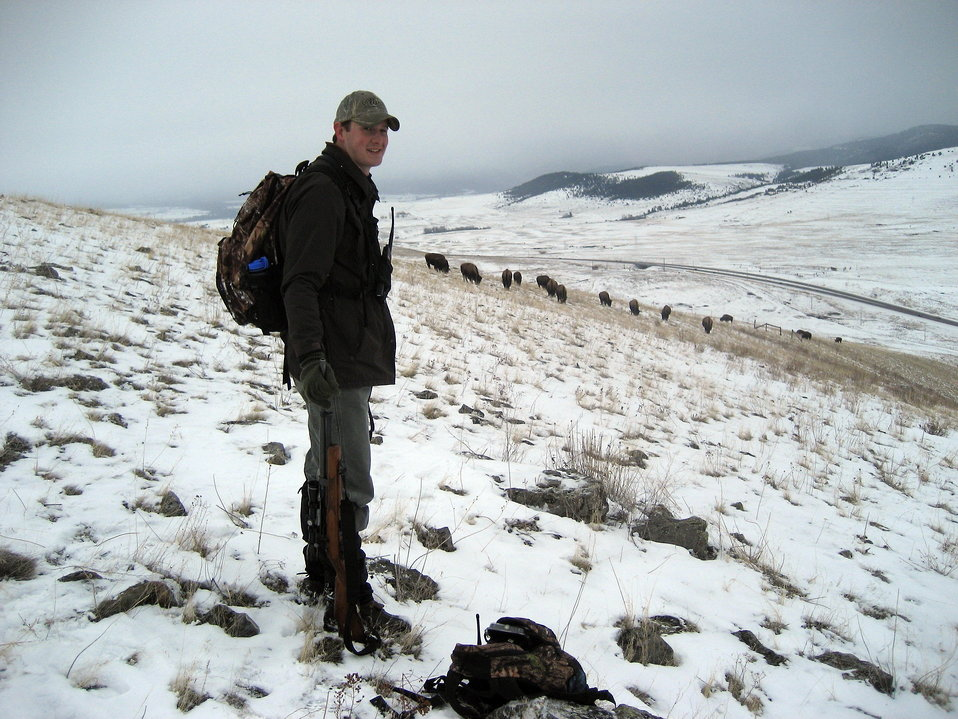 Bison Reproductive Study