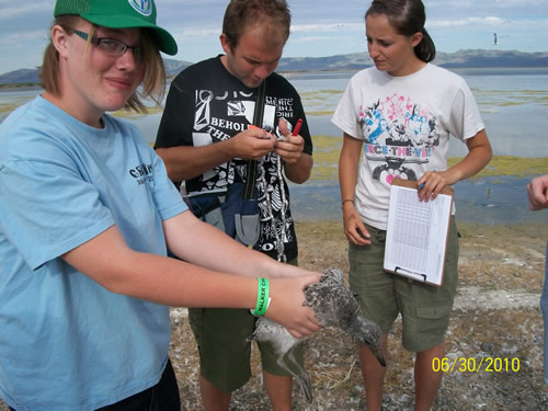 Youth Conservation Corps crew and students conduct bird research
