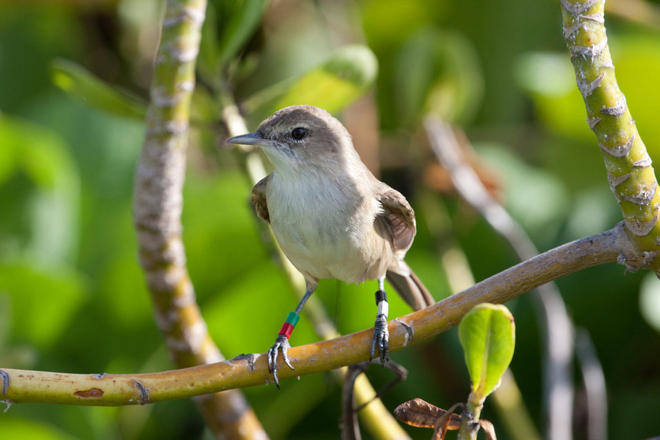 millerbird just after release