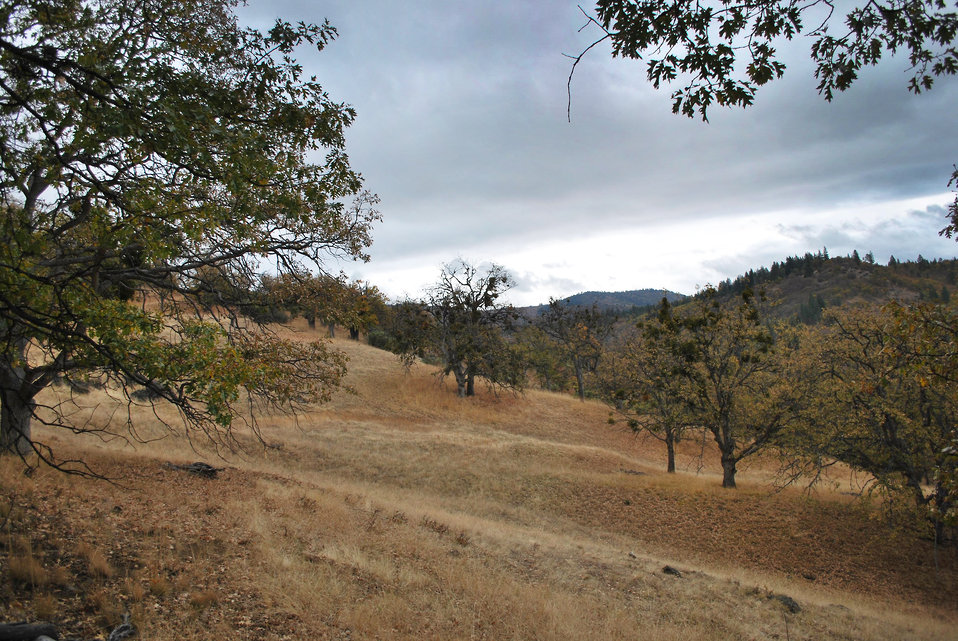 Colestin Valley Oak Restoration Project