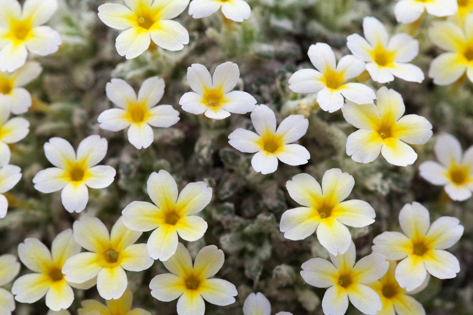 Tiny yellow white flowers