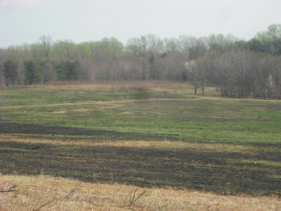 Greening One Week after Burn