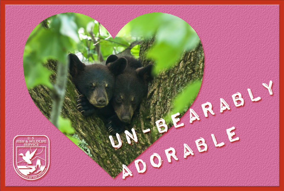 Photo of the Week - Black bear cubs (VA)