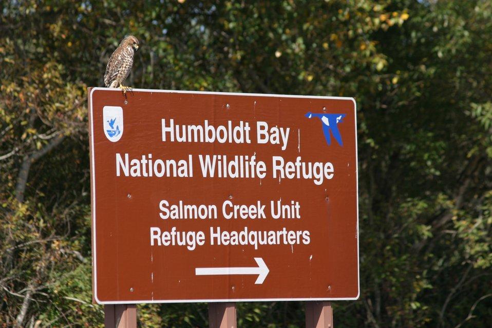 Humboldt Bay NWR
