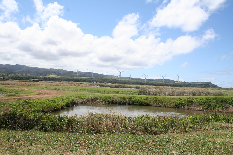 James Campbell NWR wetlands with wind facility in the background. Photo credit: USFWS