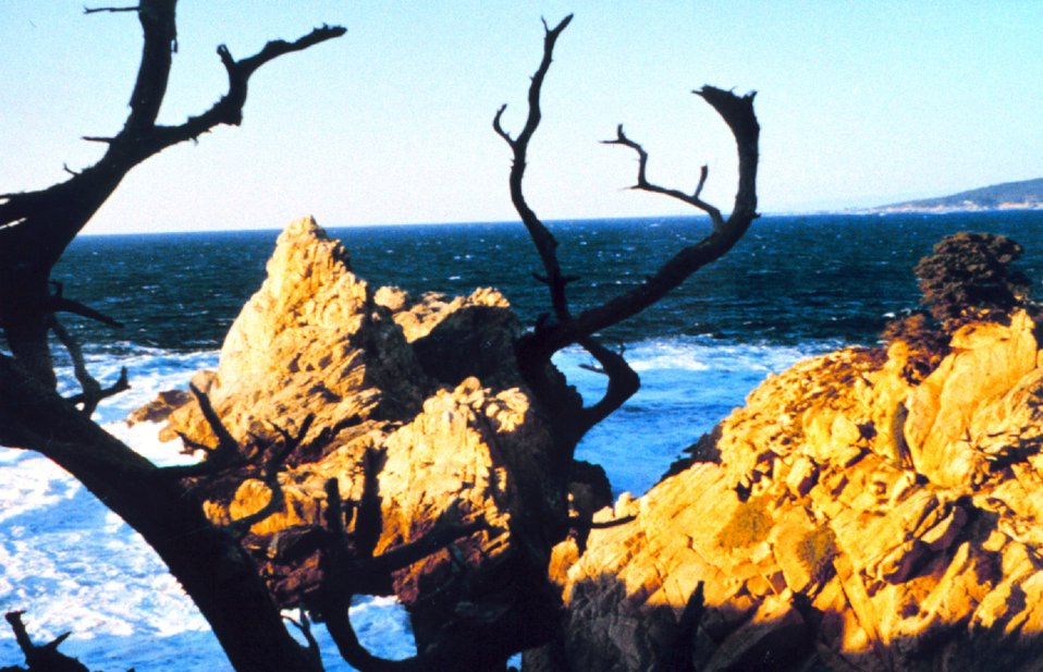 Point Lobos with sublime view of granite headland framed between branches of an ancient Monterey cypress.