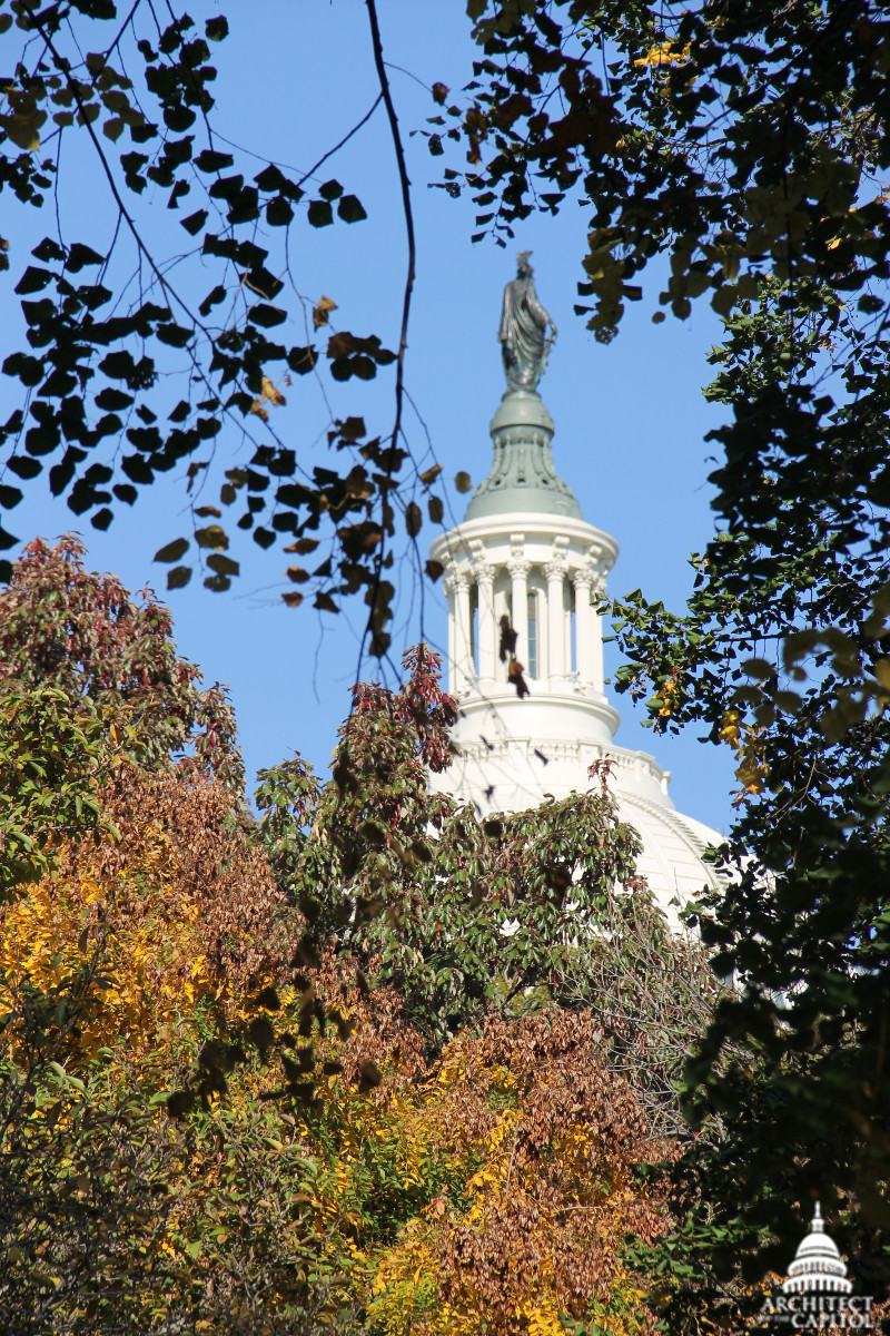 Capitol Dome on fall day