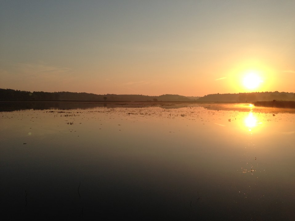 Marshbird Survey Sunrise