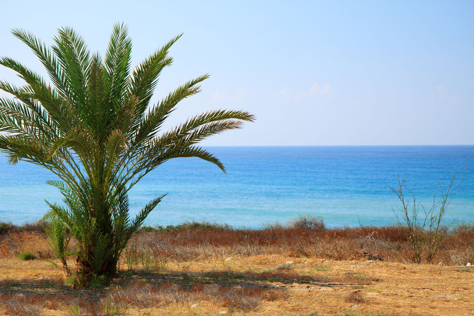 Palm tree and sea