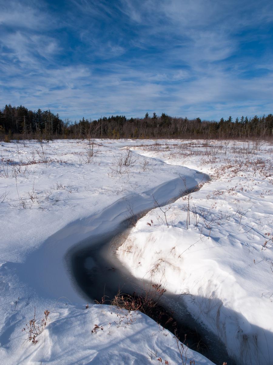 Frozen Bog