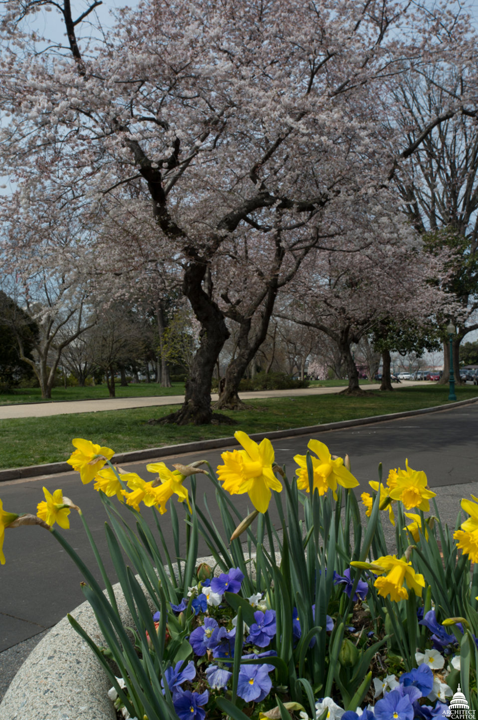 Spring along the Southeast Drive of Capitol Square