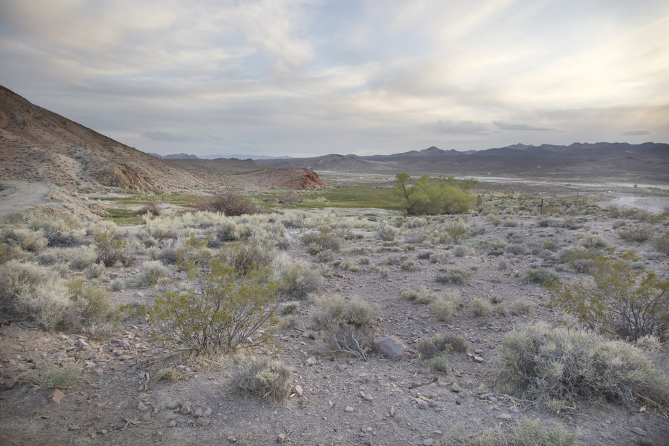 Amargosa Toad Restoration Site