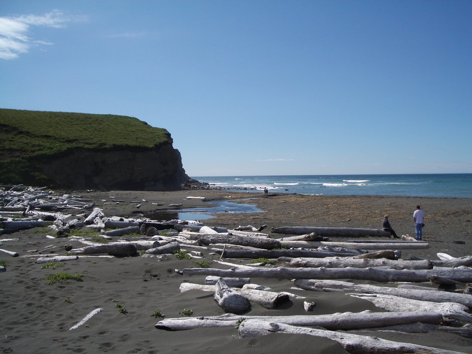 A log-strewn beach on Kodiak Island.