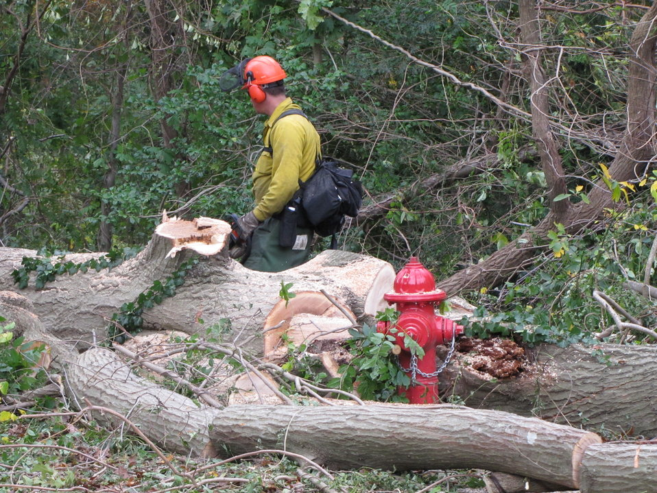 Tree removal at Target Rock National Wildlife Refuge (NY)